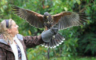 Hawk Walk at Ashford Castle