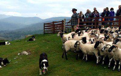 Kissane Sheep Farm
